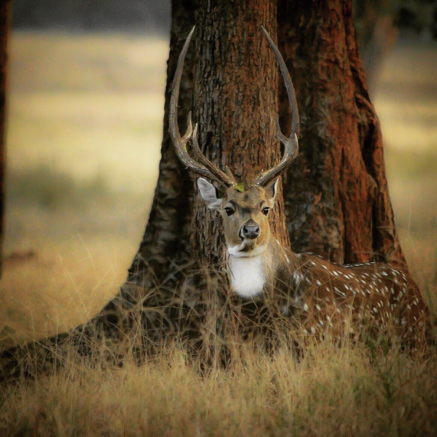 This picture I clicked at Betla National Park in Palamu district in Jharkhand India